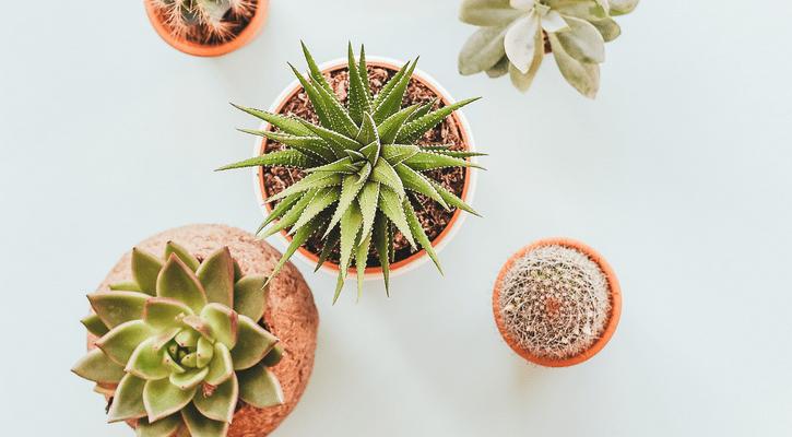 Suculentas para decoração de home office de blogueira